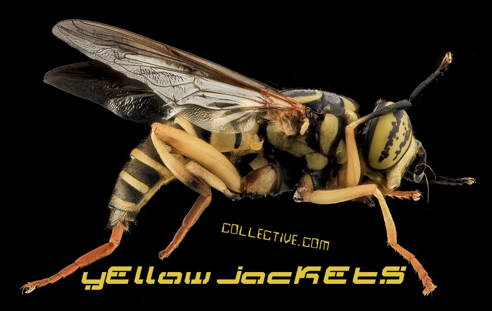 Yellow Jackets Collective